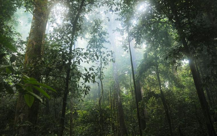 Hacia el Sínodo para la Amazonía