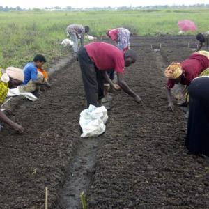 Kutxa Fundazioa, Jubikutxa y Denon Artean Denetik apoyan las cooperativas agrarias en Burundi