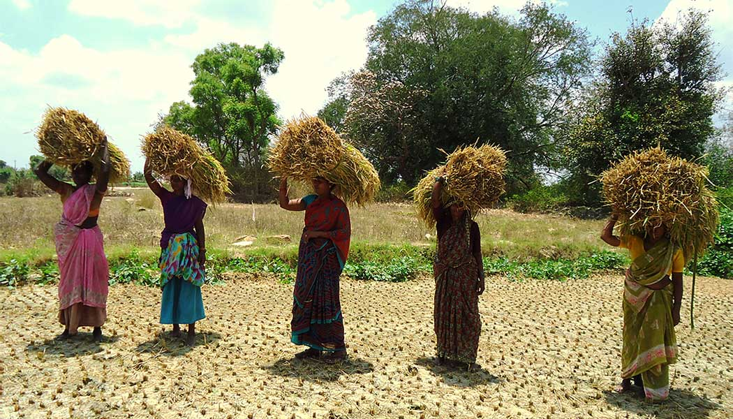 proyecto Tamil Nadu
